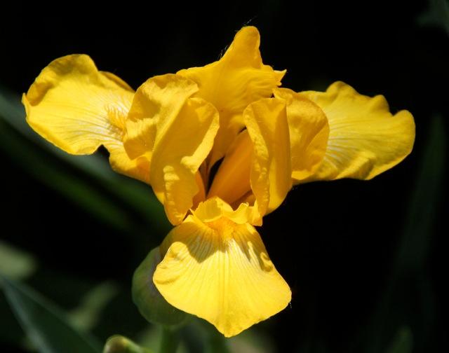 200602bbcut-iris1