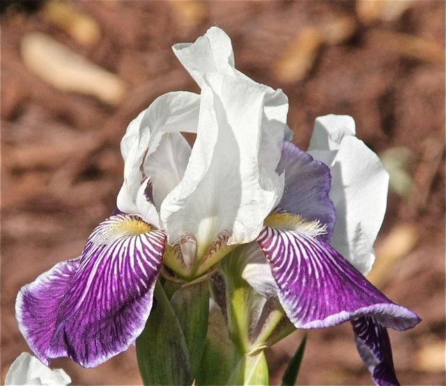 200602bbcut-iris4