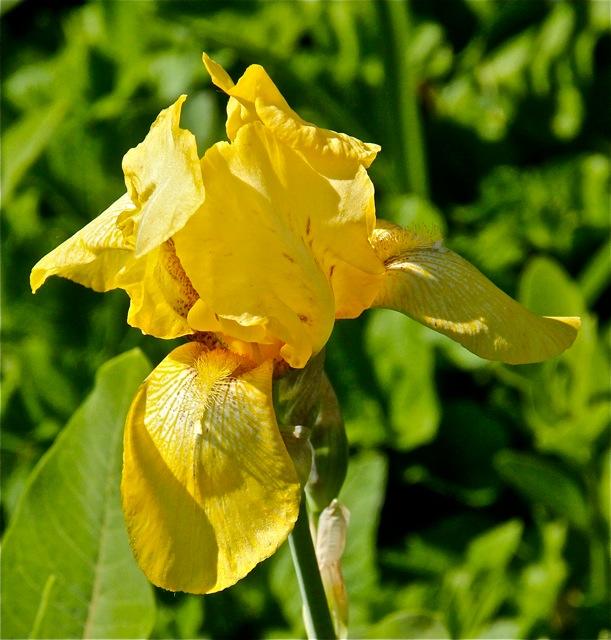 200602bbcut-iris5