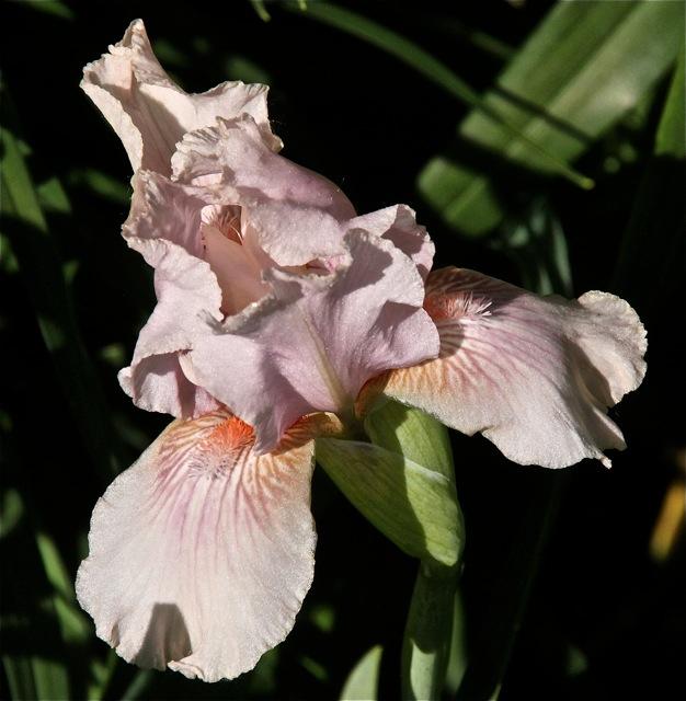 200602bbcut-iris7