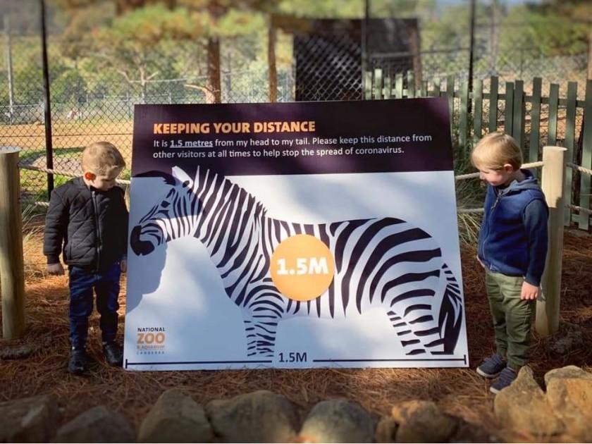 200602bbcut-zebra