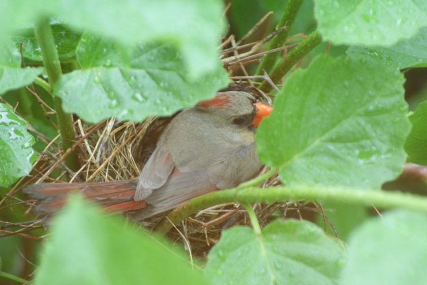 200713bbcut-cardinals2
