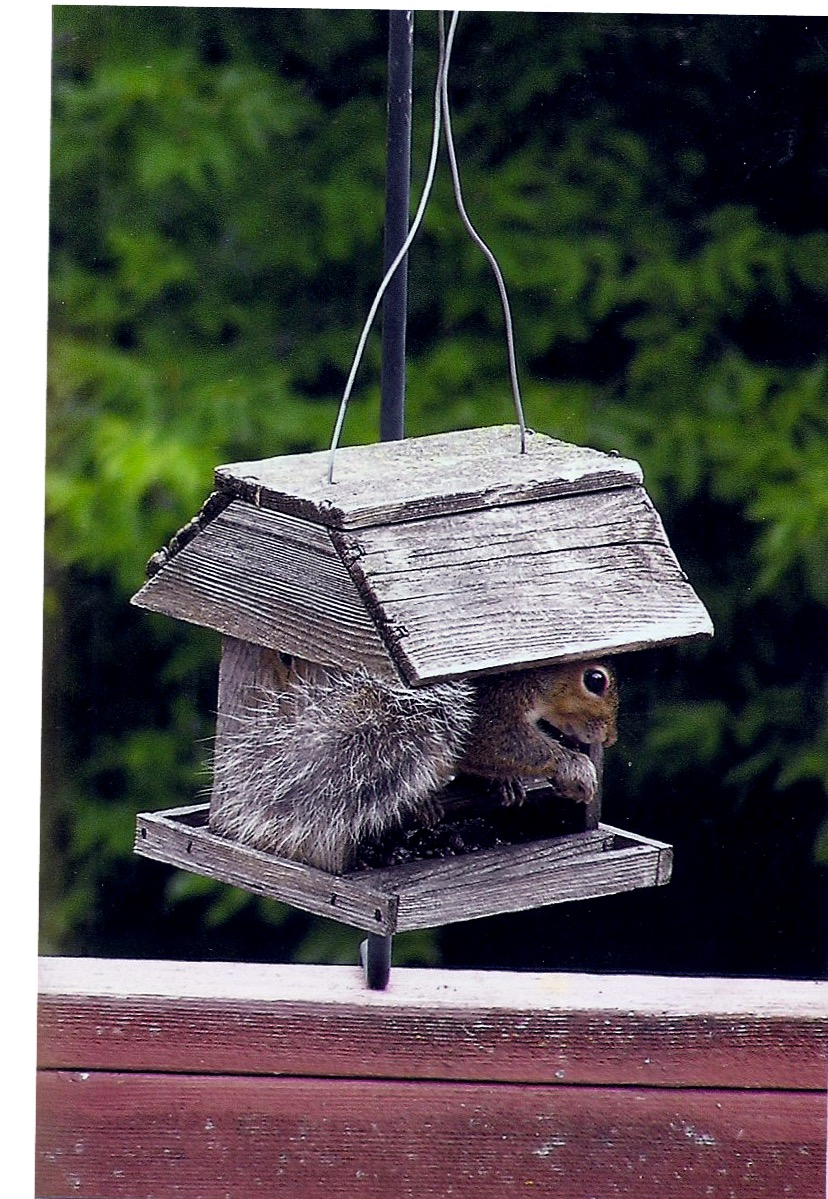 bird feeder, squirrel