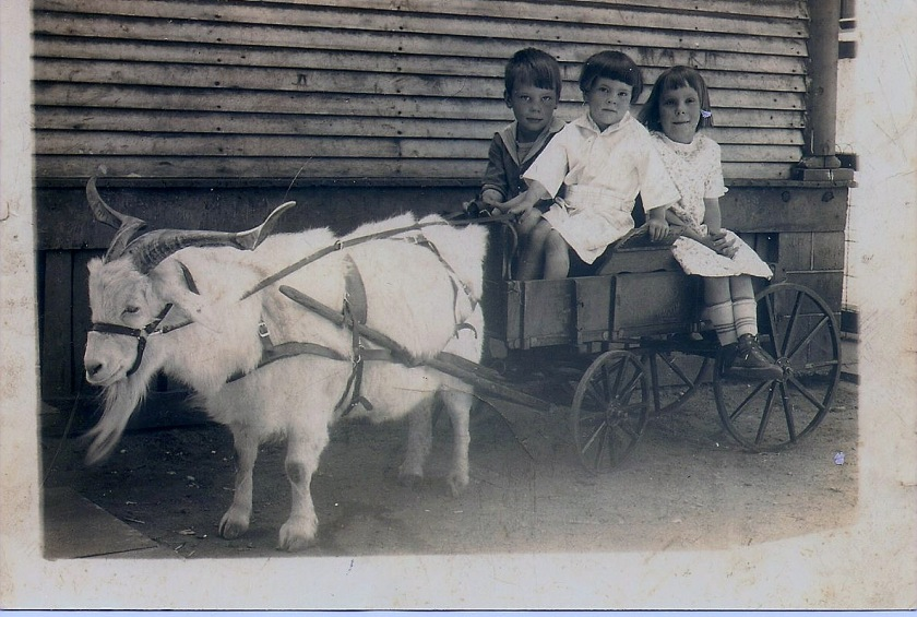 Goat cart w: three kids (no info)