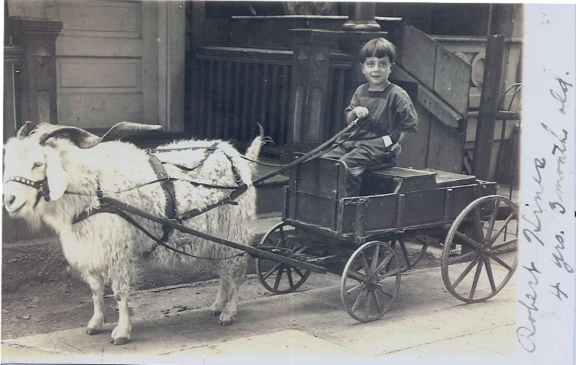 goat cart with dad Bob Hines