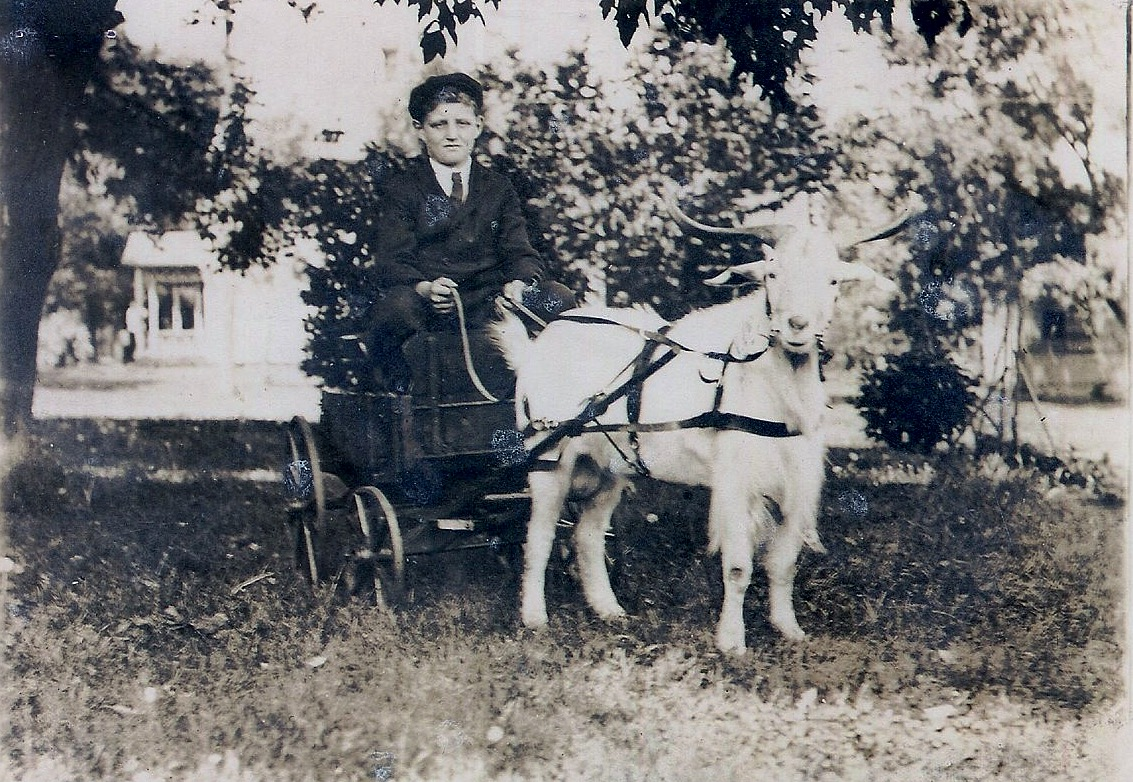 Goat cart with George Murray