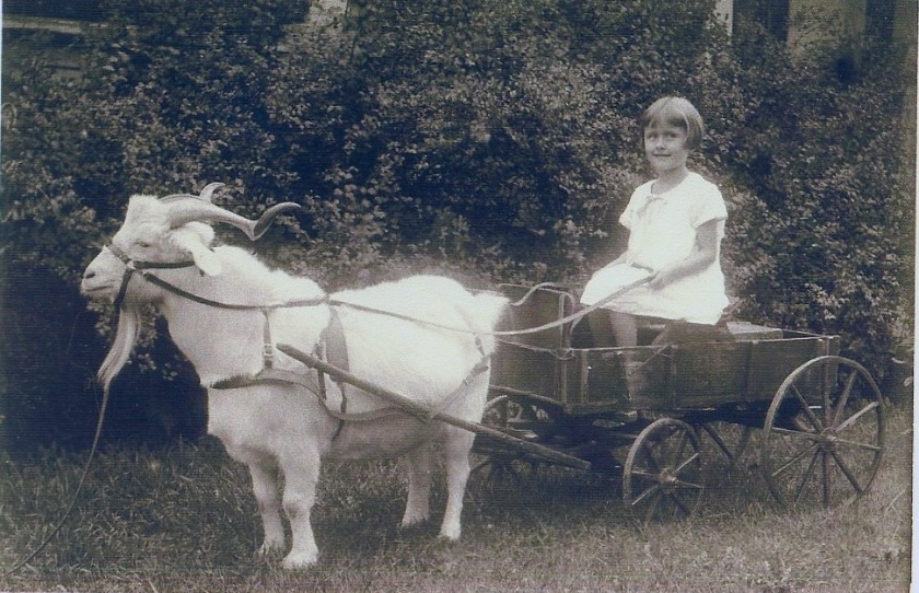 goat cart with Shirley Thom