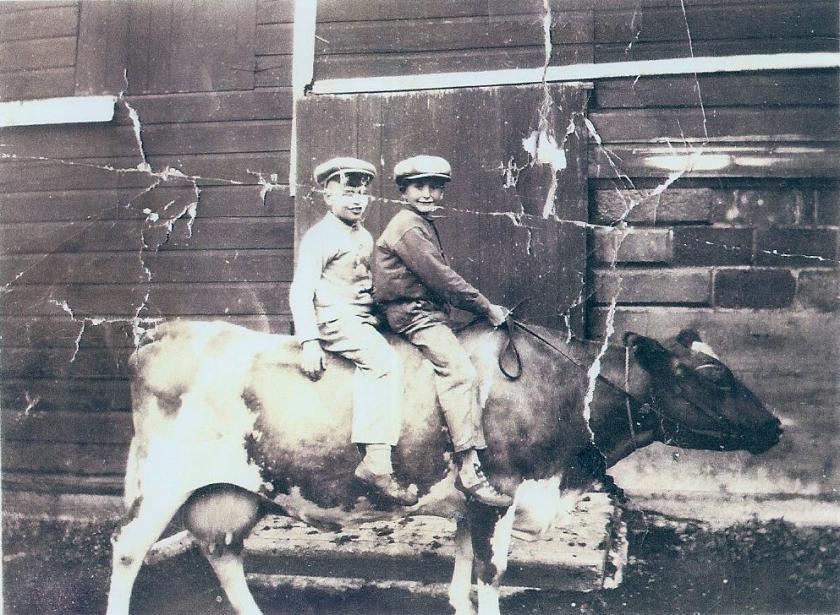 Loren Jr. and cousin Gary on cow, Winnebago, MN